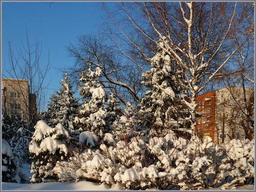 Сосны утопающие в снегу