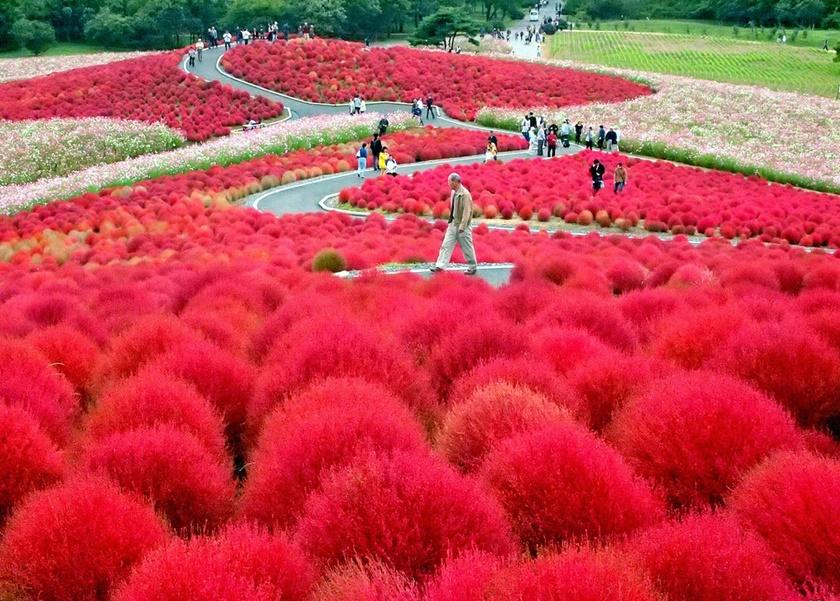 Живописный японский парк Хитати Кайхин 0 1422f1 e175c467 orig
