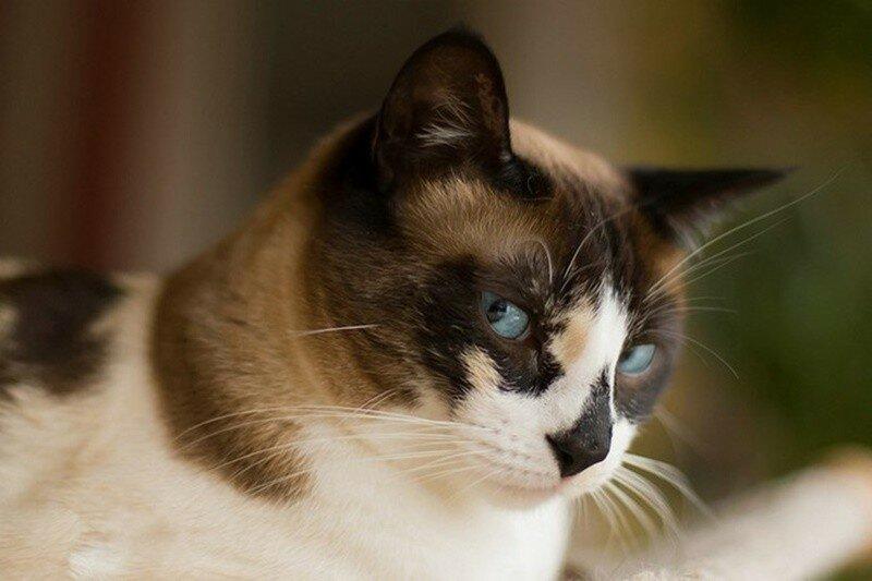 Самые красивые и необычные породы кошек (фото, цитата)