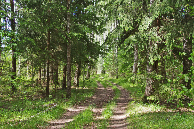 Галкинский лес