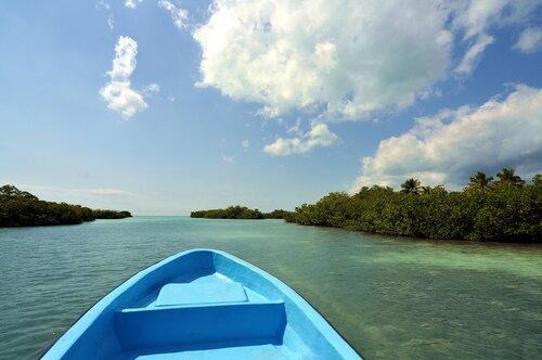 К мангровым зарослям.