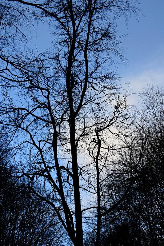Осень и синее небо