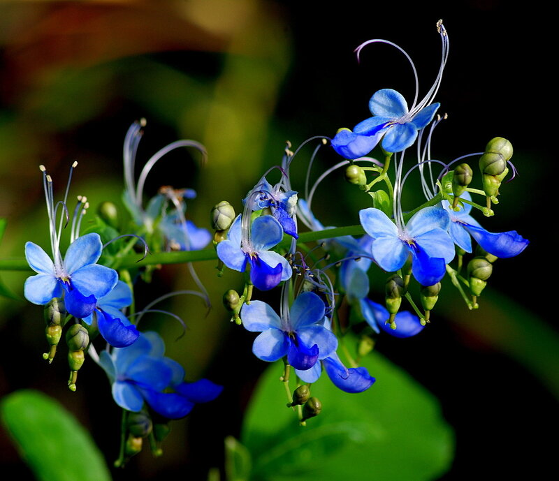 фото бабочек на цветах: