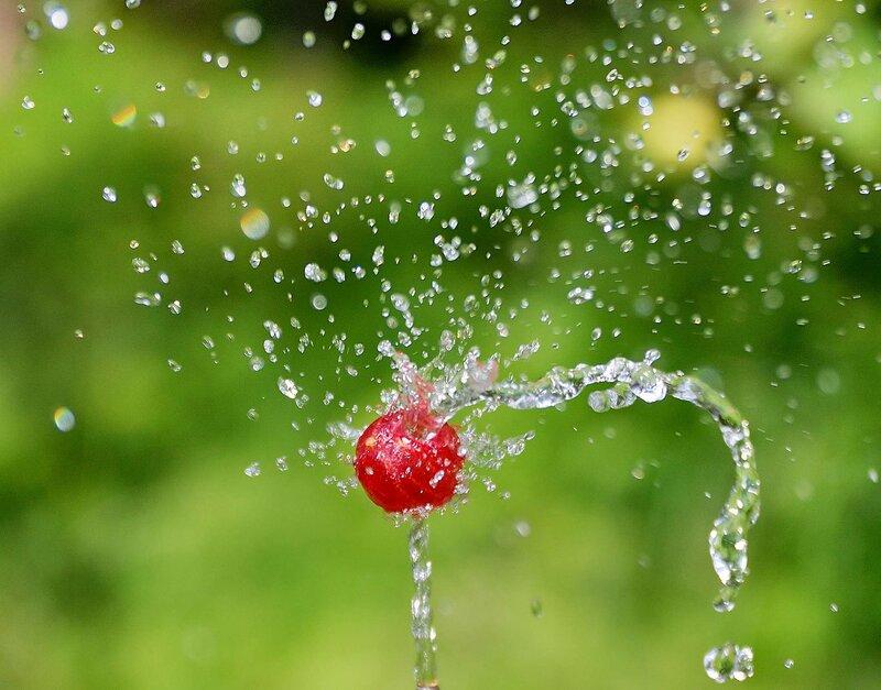 Крыжовник, танцующий в струе воды