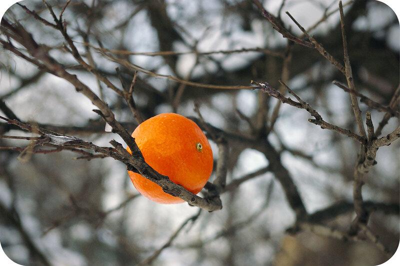 А ещё там растут мандарины