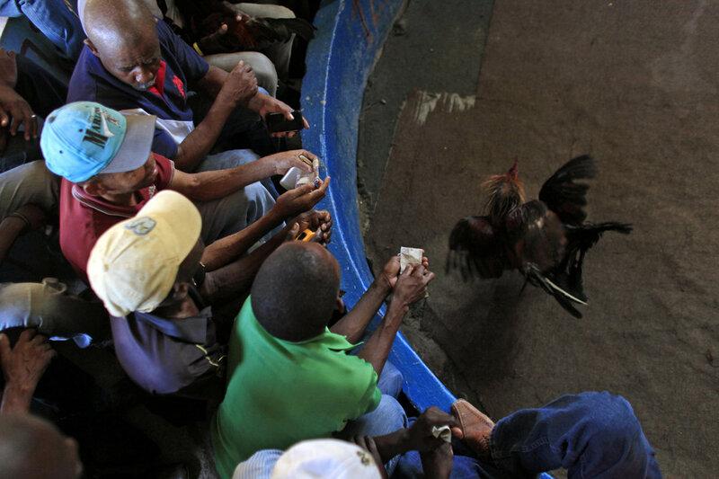 Петушиные бои на Гаити, самое популярное развлечение бедного острова