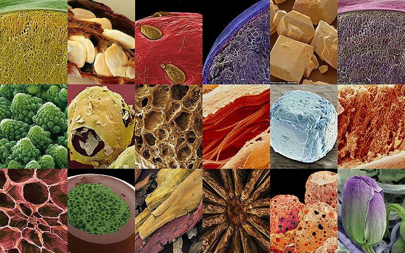 18 удивительных фото продуктов под микроскопом