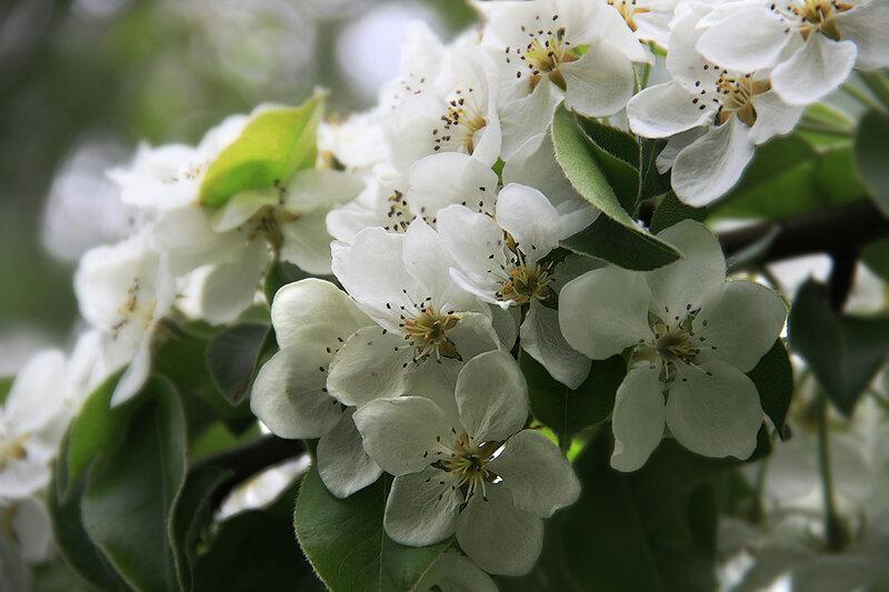 Белый наряд мая