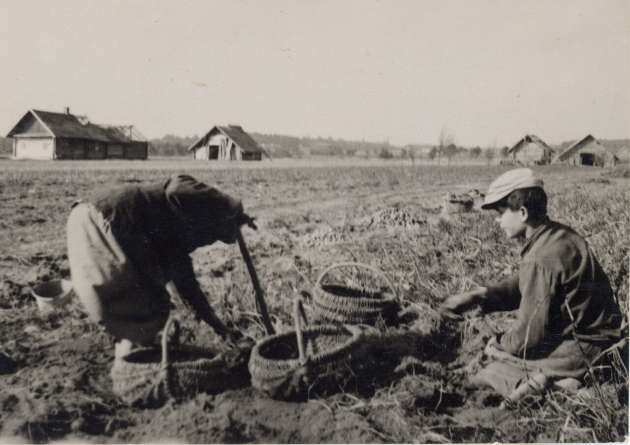 Хутор. Первый урожай.1938 год. Фото Семак Франца