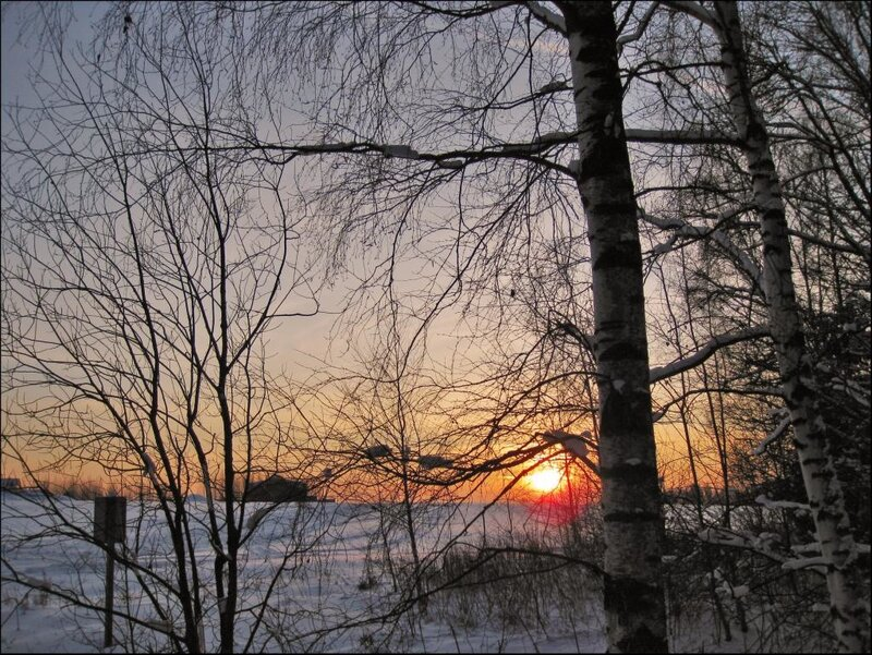 Закат на лесной опушке