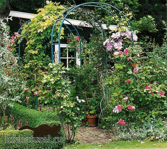 Сада с помощью которых можно своими