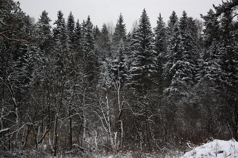 Зимний сказочный лес