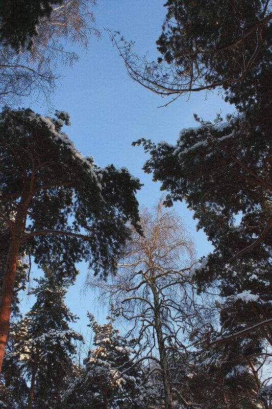 Зимний лес и яркое небо
