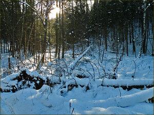В лесу уже снег