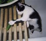1999-07_Ксюха с огурцом.JPG