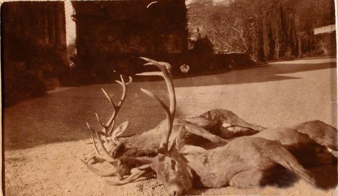 Олени, убитые во время охоты в имении князей Юсуповых