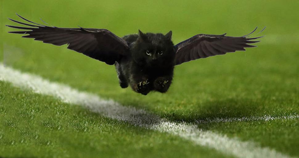 Летающий кот.