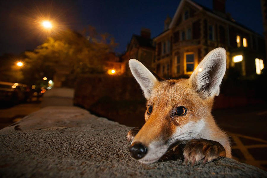 Finalists for the Wildlife Photographer of the Year 2016 (11 pics)
