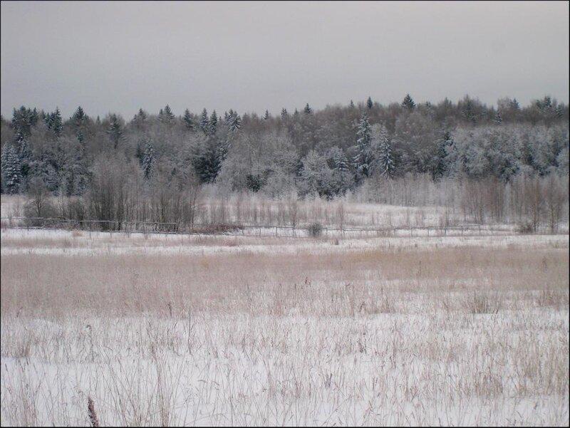 Зимний лес серым днем