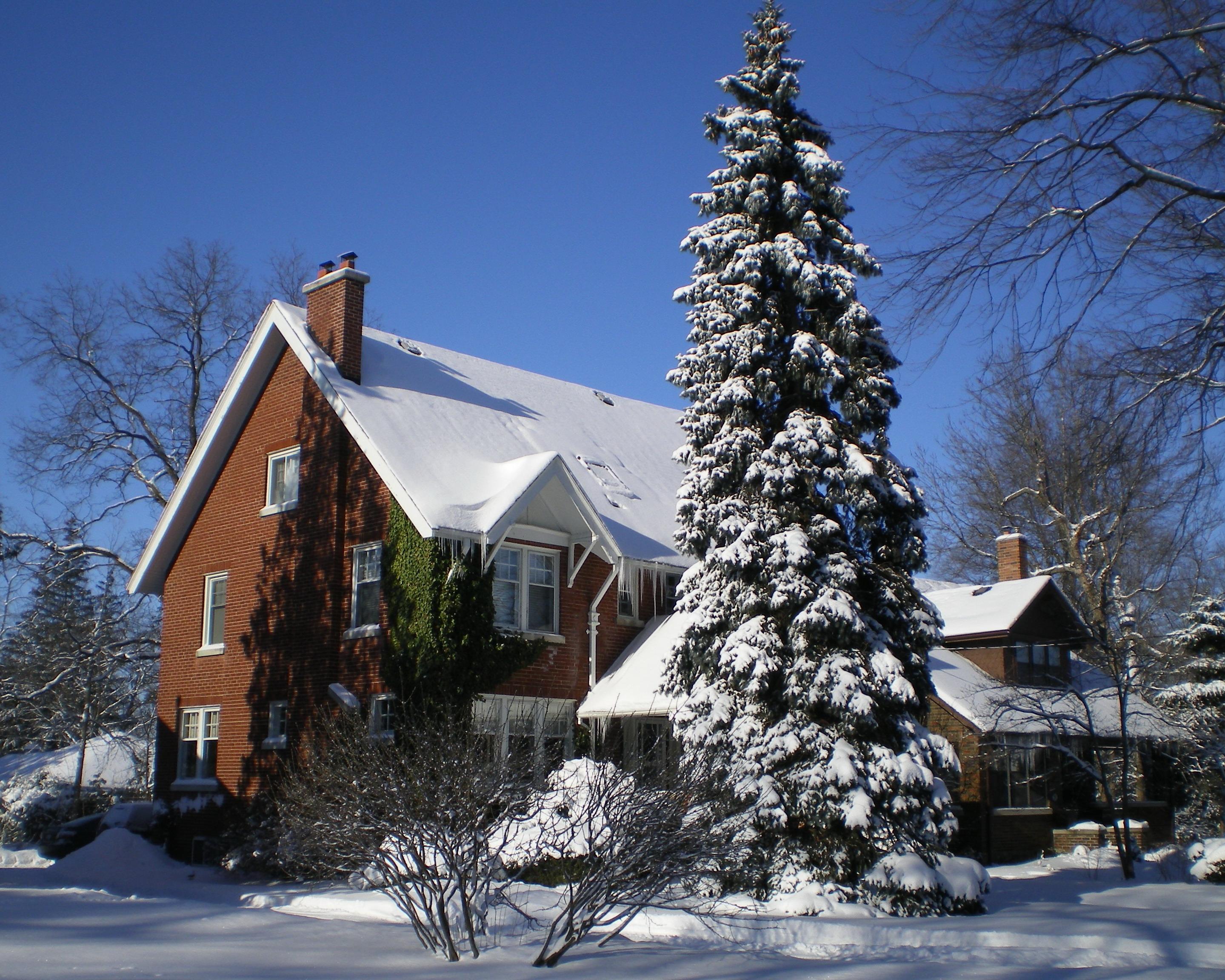 Зима ,январь