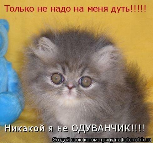 ...кошек.  С прошедшим праздником всех любителей этих животных!!--sizec.