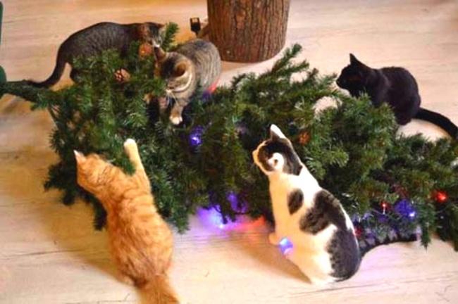 Рождественское кошачье кафе.