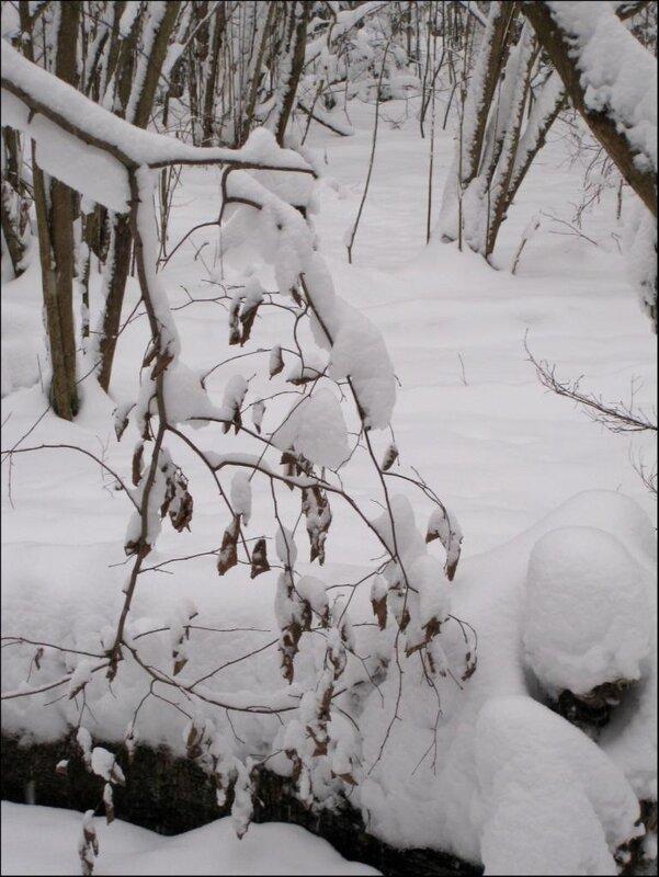 Зимний натюрморт