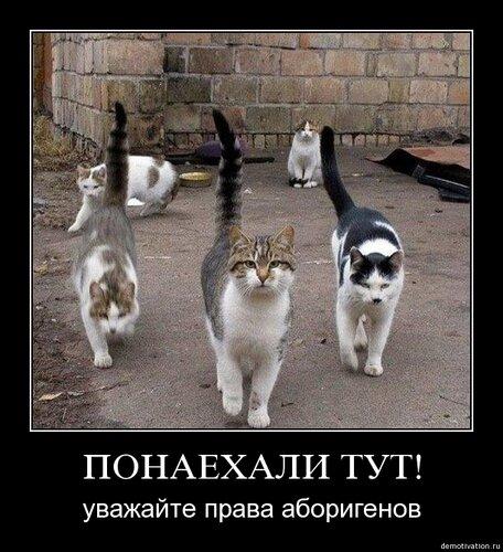 http://img-fotki.yandex.ru/get/4107/devildriver6sic6.0/0_3aecf_e7de719e_L.jpg