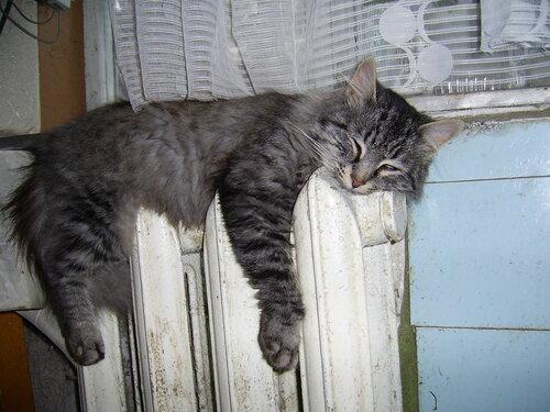 Спящий на батарее соседский кот. Отопительный сезон в разгаре.