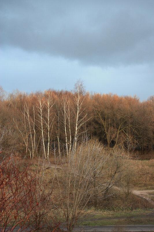 Вид на Кузьминский парк