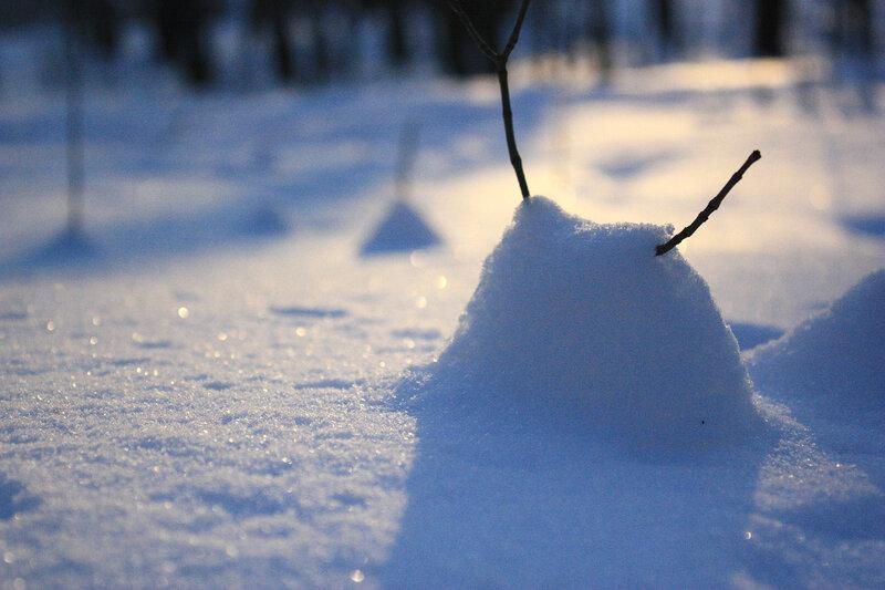 Снежный сноб и луч солнца