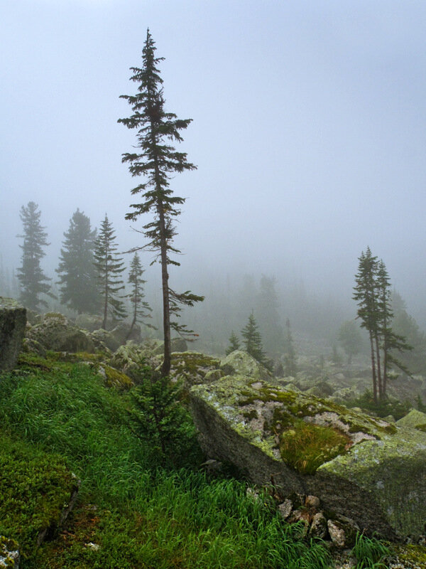 Охота за туманом