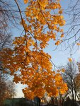 Осень-45.jpg