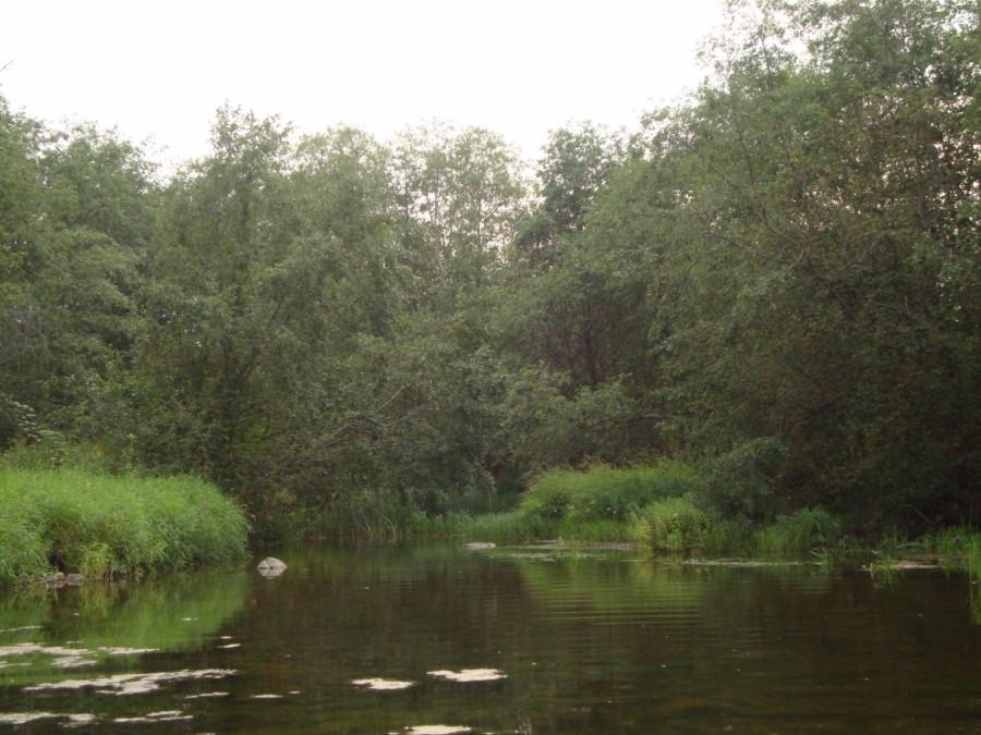Река Витка.