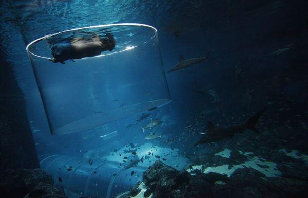 Ник Вуйичич поплавал в воде со смертельными акулами 0 12da94 813569e8 orig