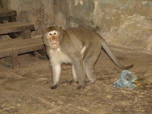 Злобный обезьян в Ангкоре - 2