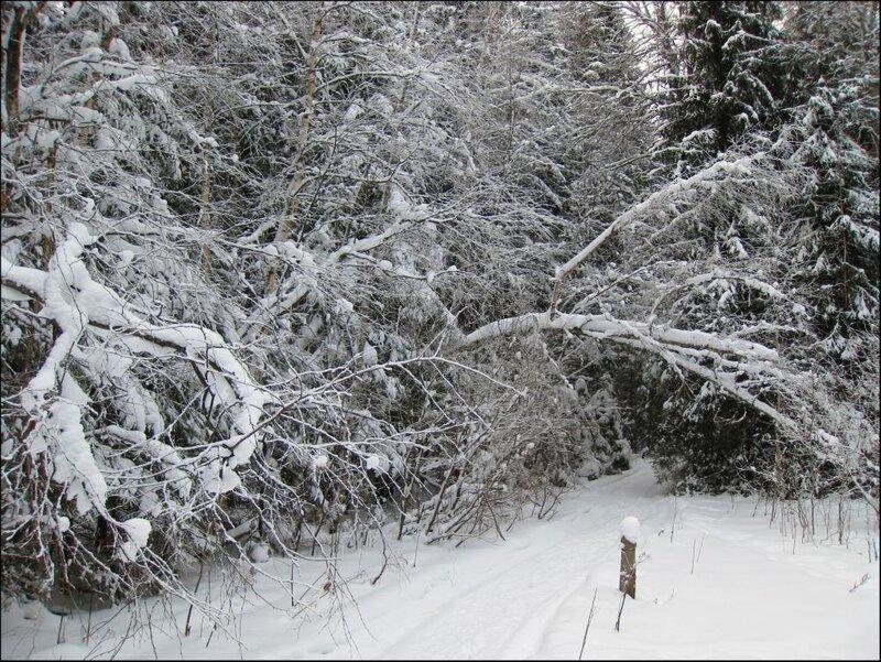 Зимний лес, арка