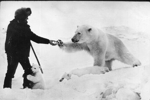 Медведи, сгущенка и пограничники