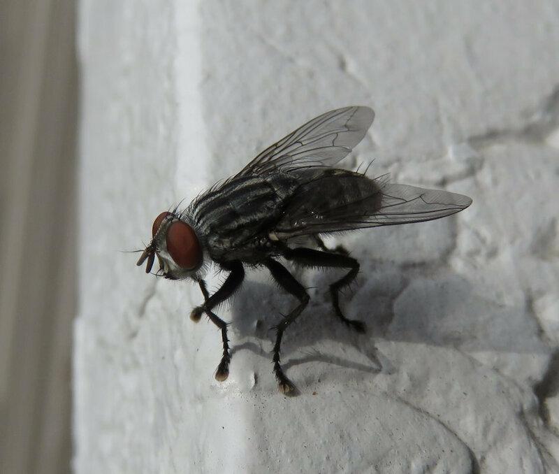Муха. Просто муха