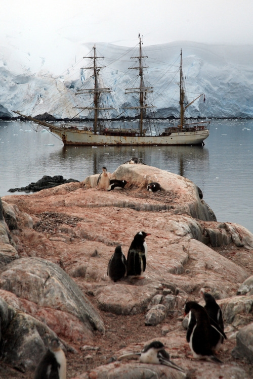 Yes, you absolutely can take a trip to Antarctica and camp with the penguins. It's not going to