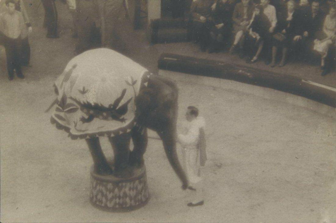 1939. Слон в цирке. Москва