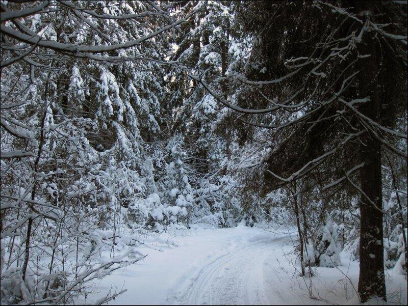 Под пологом зимнего леса
