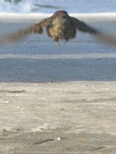 летящая попа
