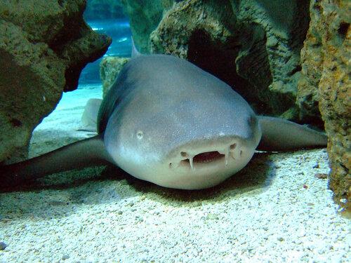 бесплатное видео как акула ест человека