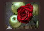 красная роза, белый налив