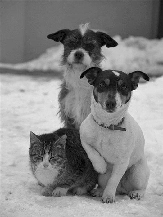 фото собак,by mekunia