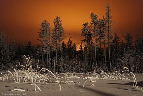 Елки, палки, лес густой...