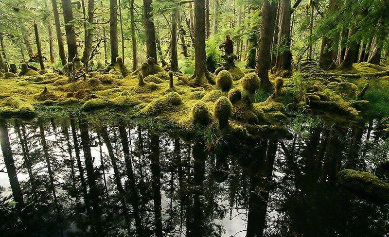 15 мистических лесов планеты (фото)