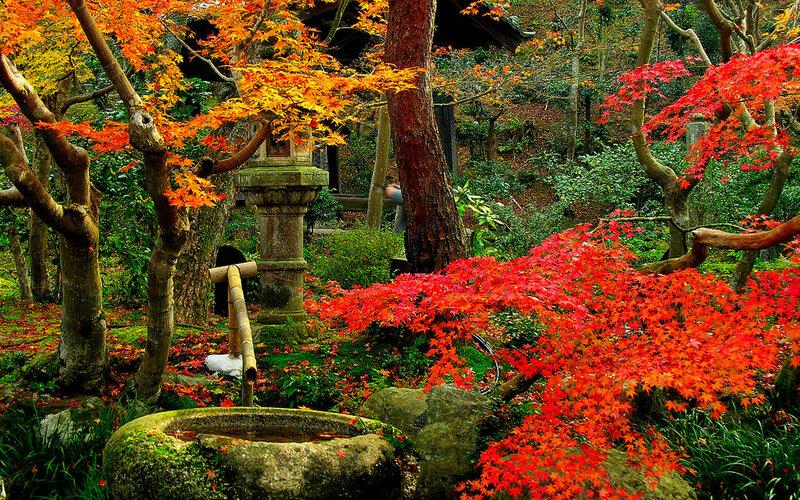 Японская осень - как гейша в желтом кимоно