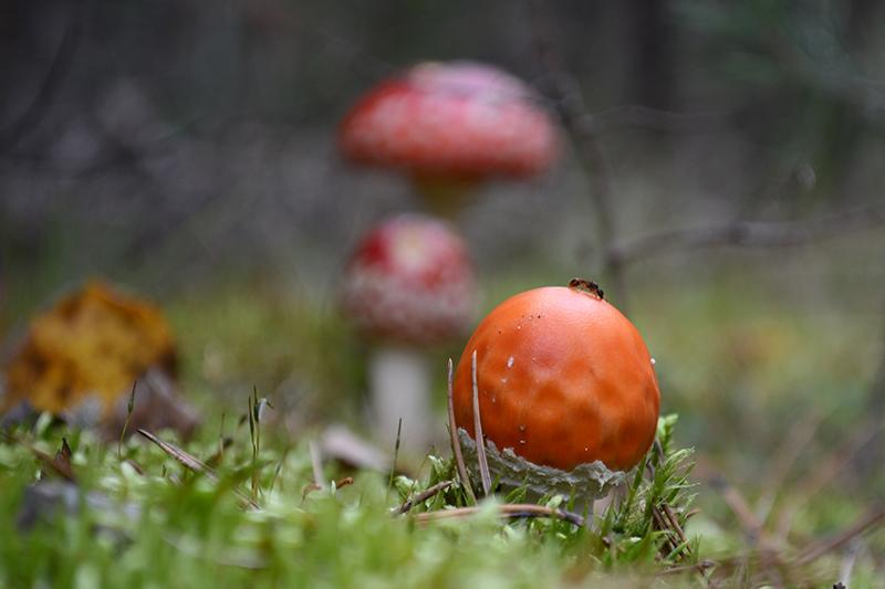 грибной мир 16 24.jpg